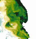 MODIS Switched Chlorophyll